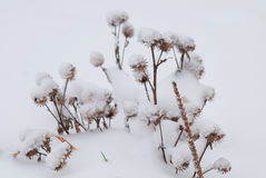 Frozenned花 免版税图库摄影