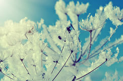 .Frozenned flower Royalty Free Stock Images