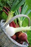 Frsh farm vetgetables. Frsh farm vegetables in a white basket Stock Photos
