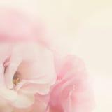 Försiktig blommabakgrund för tappning Arkivfoto