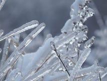 Försiktigt grässtrå under is Arkivbilder