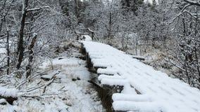 Första insnöat skogen med träbron Arkivbild