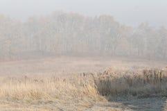Första morgonfrost i nedgången Arkivfoton