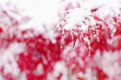 Första snöonstet på vinter Arkivbilder
