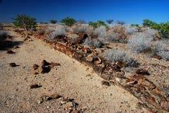 Förstenad skog. Khorixas Damaraland, Namibia Arkivbild
