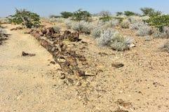 Förstenad skog, Namibia Arkivfoton