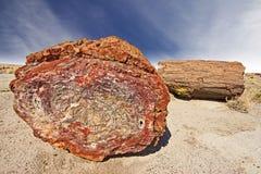Förstenat träd, förstenade Forest National Park, Arizona, USA. Royaltyfria Foton