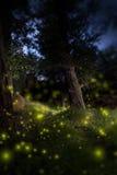 Förtrollad mörk skog Fotografering för Bildbyråer