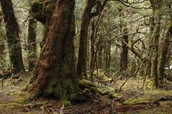 förtrollad skog Royaltyfri Foto
