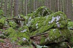 förtrollad skog Royaltyfri Bild