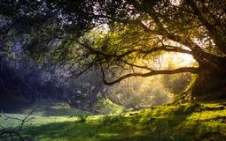 förtrollad skog Royaltyfria Bilder