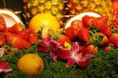 Frucht-Anordnung und mehr Lizenzfreies Stockbild
