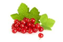 Frucht der roten Johannisbeere auf ihren Blättern lokalisiert Lizenzfreie Stockfotografie