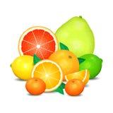 Frucht der Zitrusfrucht, Satz Zitrusfrucht Zitronen, Orangen und Kalke Stockfoto