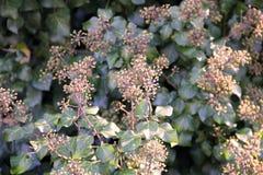 Frucht des Baums Stockfoto