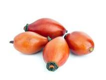 Frucht des Briar vier Stockfoto