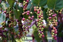 Frucht des tree2 Stockfotografie