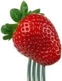 Frucht-Erdbeere lizenzfreies stockfoto