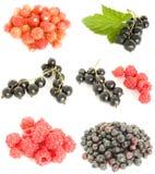 Frucht gemischt Stockfotografie