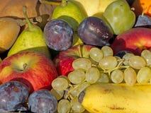Frucht gemischt worden Lizenzfreie Stockfotos