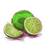 Frucht Hand gezeichnet Lizenzfreie Stockfotografie