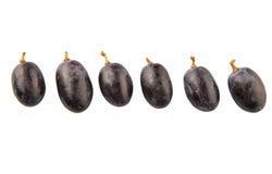 Frucht II der blauen Trauben Stockfotos