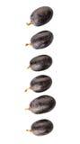 Frucht III der blauen Trauben Stockfotografie