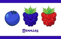 Frucht-Illustrationssatz Beeren in ganzem und geschnitten vektor abbildung