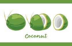Frucht-Illustrationssatz Grün-Kokosnuss in ganzem und geschnitten lizenzfreie abbildung