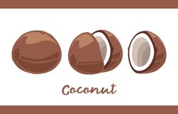 Frucht-Illustrationssatz Kokosnuss in ganzem und geschnitten vektor abbildung