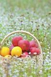 Frucht im Korb Lizenzfreie Stockfotografie