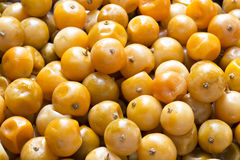 Frucht konservierte orange Zitrusfrucht Japonica Thunb Stockfotos