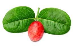 Frucht Koromcha oder Carandas Stockfotografie
