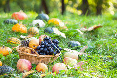 Frucht mit Kürbisen, Kürbissen und Kürbissen Stockfotografie
