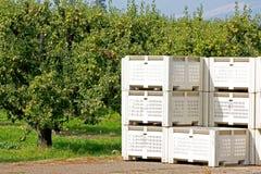 Frucht-Rahmen im Obstgarten stockfotografie