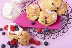 Frucht-Scones mit Beeren und Creme Stockbild