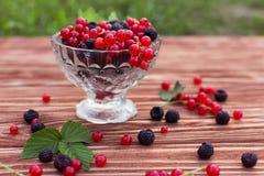 Frucht und Beeren Stockfotografie