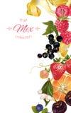 Frucht- und Beerenfahne lizenzfreie abbildung