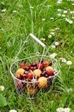 Frucht- und Beerenmischung im Drahtkorb Lizenzfreie Stockbilder