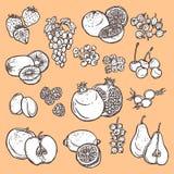 Frucht- und Beerenskizzenikonen Lizenzfreie Stockfotografie