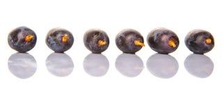 Frucht VI der blauen Trauben Stockfotos