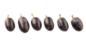 Frucht VIII der blauen Trauben Lizenzfreie Stockbilder