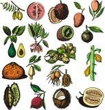 Fruchtabbildungserie lizenzfreie abbildung