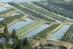 Fruchtbare Felder im Delta von Neretva-Fluss in Kroatien Stockbild