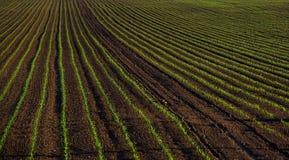 Fruchtbares Feld, Ernten, Ackerland Lizenzfreie Stockfotos