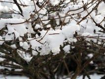 Fruchtbaumaste wogen unten durch frischen Schnee im Massif Central, Frankreich stockfotos
