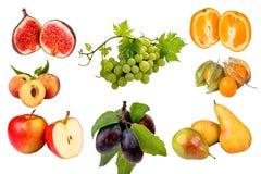 Fruchtcollage stockbild
