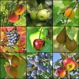 Fruchtcollage lizenzfreie stockfotografie