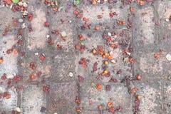 Fruchtfall zu Boden Stockbilder
