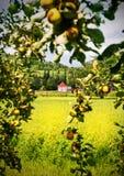 Fruchtgarten mit Seitenansicht des Landes Stockbilder
